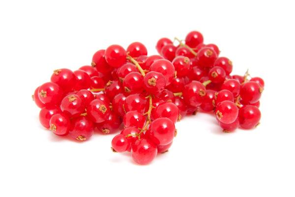 Organic Elderberry Juice Concentrate