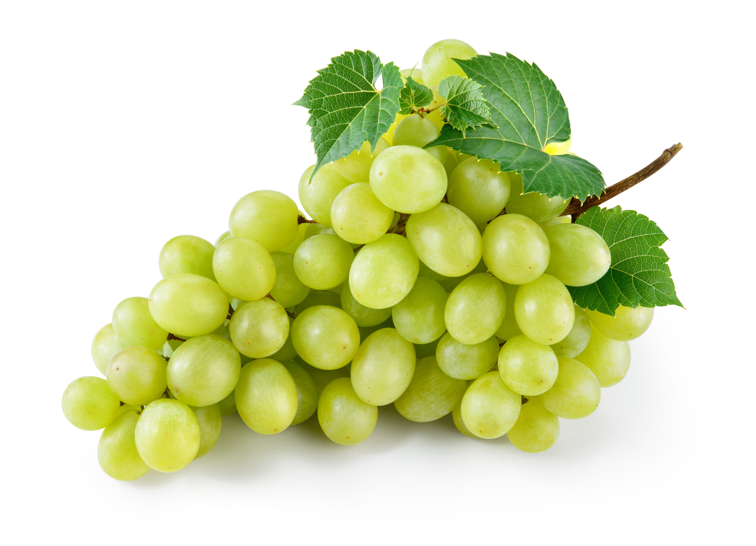 Grape Juice Concentrate, White  (Kosher)
